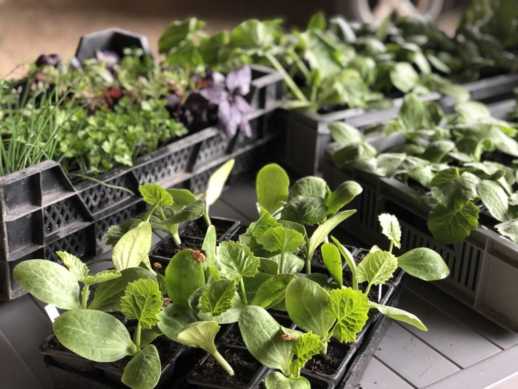 Plants maraichers bio